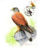 Buzin - Faucon Crécerelle - 1985-.. Birds (Buzin)