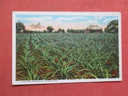 Field Of Pineapples   Puerto Rico Ref 3759 - Puerto Rico