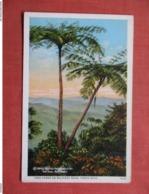 Tree Ferns On Military Road  Puerto Rico Ref 3759 - Puerto Rico