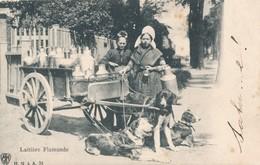Melkboerin Hondenkar Laitière Flamande Attelage à Chiens, 1906 H.N. à A. 34 - Spannen