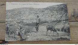 CARPIAGNE : Le Troupeau Du Camp A L'abreuvoir .................. ER-3159 - Frankrijk