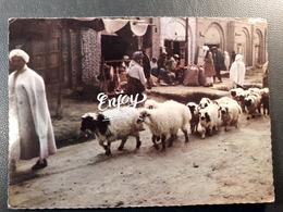 Kandahar - Afghanistan - Troupeau De Mouton - Commerce , Boutiques - Animaux & Faune