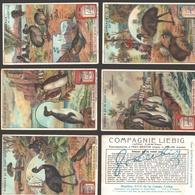 Liebig - Vintage Chromos - Series Of 6 / Série Complète - Oiseaux Qui Ne Volent Pas - Français - Liebig