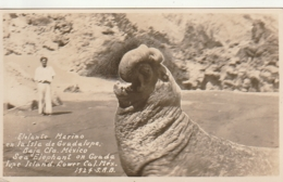 ***   *** Baja Mexico - Elefante Marino En La Isla De Guadalupe - écrite TTB éléphant De Mer - Mexico