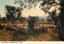 BETHLEHEM - Shepherds' Field - Israele