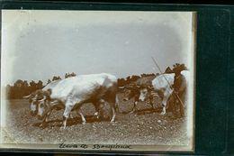 ETAVES PHOTO LE BERGER  1900 - Frankreich
