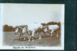 ETAVES PHOTO ATTELAGE   1900 - Frankreich