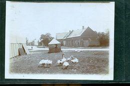 ETAVES PHOTO LA FERME    1900 - Frankreich