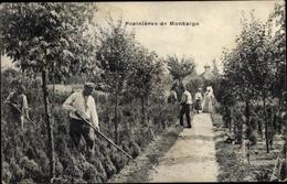 Cp Montaigu Scherpenheuvel Flämisch Brabant, Pepinieres, Garten - Autres