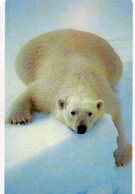 UNITED STATES - B.E.L. - THEMATIC ANIMALS POLAR BEAR - MINT - Verenigde Staten