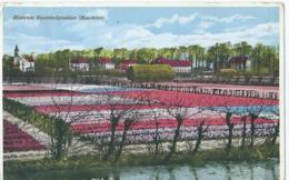 Bloeiende Bloembollenvelden (Hyacinten) - Uitg. Vigevano - 1967 - Pays-Bas
