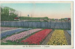 Uit De Bloemenvelden - Tulpen - Weenenk & Snel Blv. 6 - 1934 - Pays-Bas