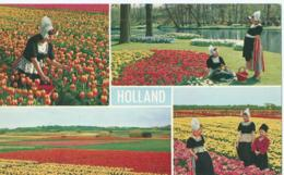 "Holland - Bollenvelden - Uitgave ""Rembrandt"" No 2 - Pays-Bas"