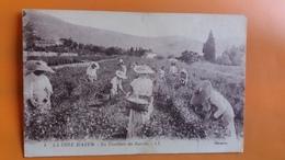 La Ceuillette Du Jasmin - Autres Communes