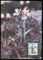 Mk Greenland Maximum Card 1992 MiNr 223 | Flowers, Hairy Lousewort - Cartes-Maximum (CM)