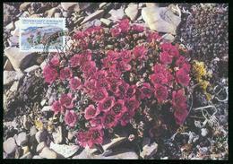 Mk Greenland Maximum Card 1992 MiNr 224 | Flowers, Purple Saxifrage - Cartes-Maximum (CM)