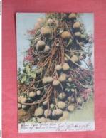 Cannon Ball Tree     Trinidad   Has Stamp & Cancel      Ref 3761 - Trinidad