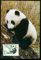 Mk China, People's Republic Maximum Card 1995 MiNr 2631   China-Australia Joint Issue, Endangered Species, Giant Panda - 1949 - ... République Populaire