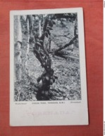 Cocoa Tree   Trinidad   Has Stamp & Cancel      Ref 3761 - Trinidad