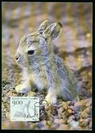 Mk Greenland Maximum Card 1994 MiNr 251 | Animals, Mountain Hare - Cartes-Maximum (CM)