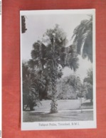 RPPC  Tailpot  Palm      Trinidad  Has Stamp & Cancel      Ref 3762 - Trinidad