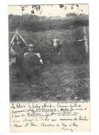 RAMBOUILLET (78) Bergeries De Pommeraie Troupeau De Mérinos Noirs - Rambouillet