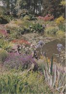 Postcard - Royal Horticultural Soc's Gdn, Wisley, Surrey, Irises And Bog Plants .. Unused Very Good - Unclassified
