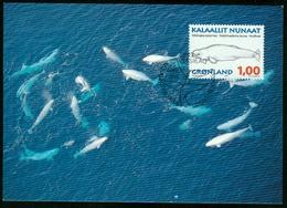 Mk Greenland Maximum Card 1996 MiNr 289 Y | Whales, Beluga - Cartes-Maximum (CM)