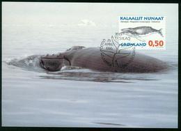 Mk Greenland Maximum Card 1996 MiNr 288 Y | Whales, Humpback Whale - Cartes-Maximum (CM)