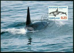 Mk Greenland Maximum Card 1996 MiNr 287 Y | Whales, Killer Whale - Cartes-Maximum (CM)
