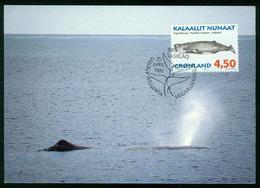 Mk Greenland Maximum Card 1996 MiNr 290 Y | Whales, Sperm Whale - Cartes-Maximum (CM)