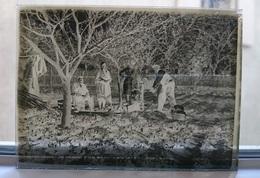 AU JARDIN DANS LE POTAGER - PLAQUE DE VERRE PHOTO 8.5 X 6.5 CM - Plaques De Verre
