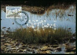 Mk Greenland Maximum Card 1989 MiNr 197 | Flowers, Cotton Grass - Cartes-Maximum (CM)