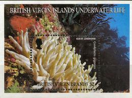 BRITISH VIRGIN ISLANDS, 1998, MARINE FAUNA, CORALS, YV#B.95, SS, MNH - Meereswelt