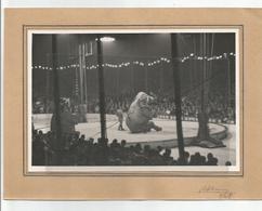 Photographie 38 Isère Grenoble Cirque Pinder éléphant Dompteur 1948  Photo 13x18 Cm Env Collée Sur Carton - Places