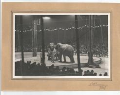 Photographie 38 Isère Grenoble Cirque Pinder éléphant Dompteur 1948  Photo 13x18 Cm Env Collée Sur Carton - Lieux