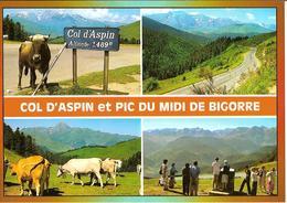 CPM - HAUTES PYRENEES - COL D'ASPIN 1489 M - PIC DU MIDI DE BIGORRE  2877 M - VACHES - Francia