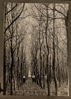 Trees Forest 13*9CM Fonds Victor FORBIN 1864-1947 - Otros
