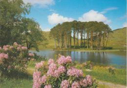 Postcard - Loch Eilt In The Western Highlands Card No.7497x Unused Very Good - Postcards