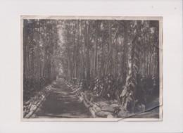 CULTURE DE LA VANILLE VANILLA    23*17CM Fonds Victor FORBIN 1864-1947 - Otros