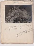Xylology Forestry 17*11CM Fonds Victor FORBIN 1864-1947 - Otros