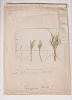 SEEDLINGS 1909 Xylology Forestry 16*10CM Fonds Victor FORBIN 1864-1947 - Otros