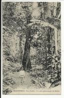 * MARTINIQUE , Nos Forêts , Un Coin Pittoresque De Balata , CPA ANIMEE - Martinique