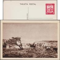 Venezuela 1963. Entier Illustré Officiel. État De Guárico. Vacher Essayant D'attraper Des Bœufs Au Lasso - Vaches