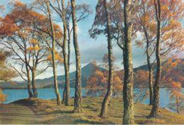 Postcard - The Shores Of Loch Rannoch, Perthshire, Scotland - Card No.3457 Unused Very Good - Postcards