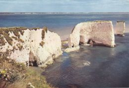 Postcard - Dorset, Near Studland, Old Harry Rocks - Card No..cp50 Unused Very Good - Postcards