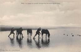 40 .n°  107204 .  Dax .chasse .la Chasse Aux Canards Sauvages Dans Les Marais De Saubusse . - Dax
