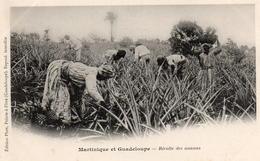 CP Antilles Guadeloupe  Martinique Récolte Ananas - Ohne Zuordnung