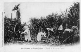 CP Antilles Guadeloupe  Martinique Récolte Canne à Sucre - Antilles