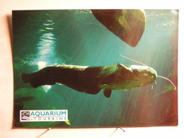 Animaux - Poissons - Silure Glane - Vissen & Schaaldieren